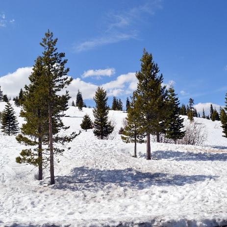 things to do in tahoe during spring break